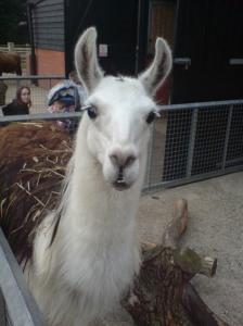 The High Llama